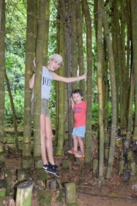 Exploring in the bamboo