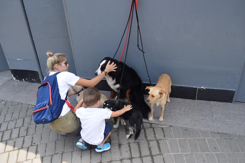 Dogs in Miraflores