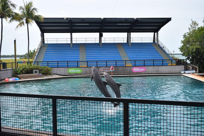 Miami Seaquarium, flipper, dolphins