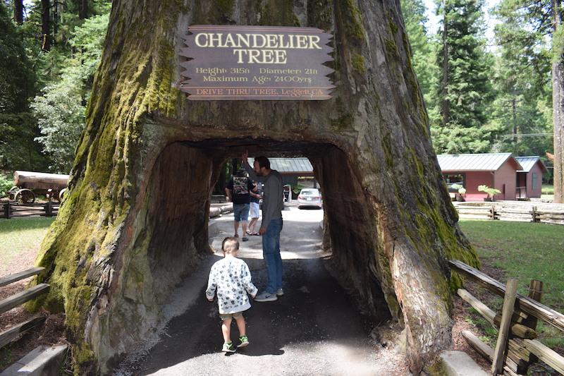 Chandelier tree, drive through