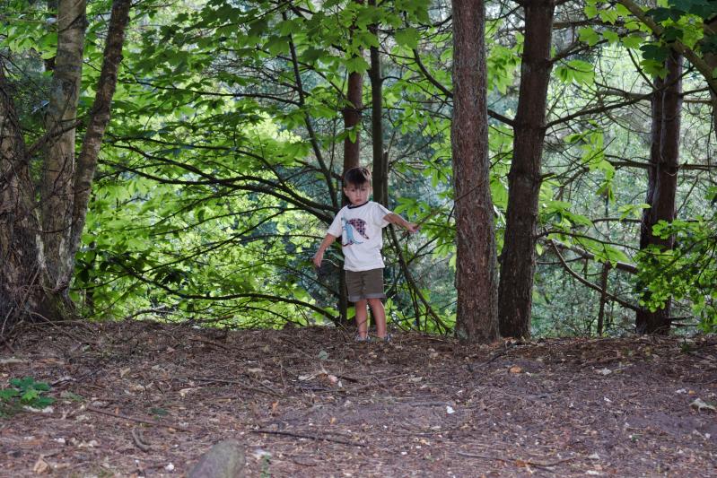 Exploring in the Elveden forest